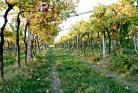 2013-11-05 Introduktion till vinets värld - Grundkurs