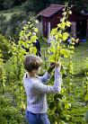 2014-06-29 studiebesök på vingården Ulvesund